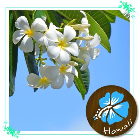 ハワイアンアロマ講習