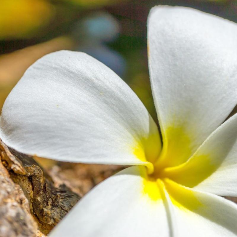 coki.miyaのハワイアンアロマ講座